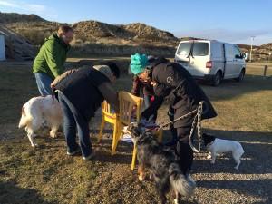 Syltseminar Hundstage 2016