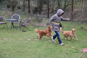 Seminarhunde